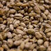 Crisp Wheat Malt